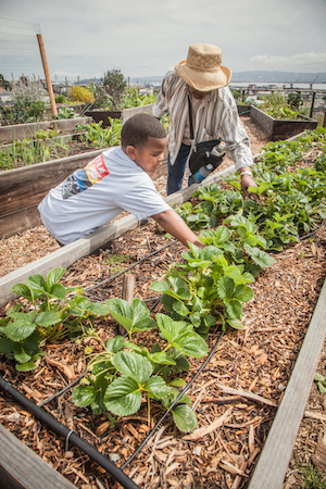 A young Potrero housing resident works in the community garden. Above, the walk club strolls through the neighborhood. Photos/Clark Mishler, BRIDGE Housing